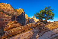 Zion  - The Yosemite of red rock
