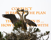 _MG_5475-Conflict.jpg